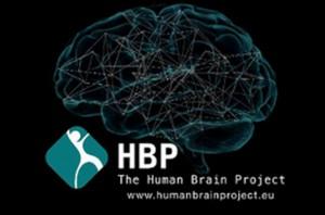 HBP human brain