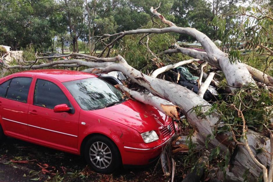 A car damaged by a fallen tree at the Annerley soccer club in Brisbane after severe thunderstorms, November 28, 2014. ABC News: Katie Cassidy