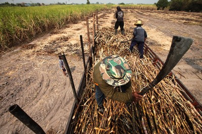 Sugar-cane farmers in Chon Buri province are among the more than 40% of Thailand's population engaged in agriculture, where there is a high degree of underemployment and off-season unemployment. Nonetheless, they are counted as employed. (photo by Patipat Janthong)