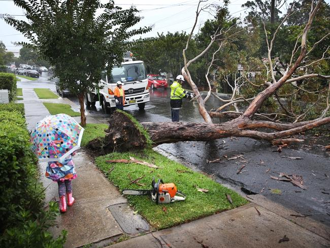 SES personnel removing a large tree down in Naremburn in Sydney's north. Photo: Phil Hillyard