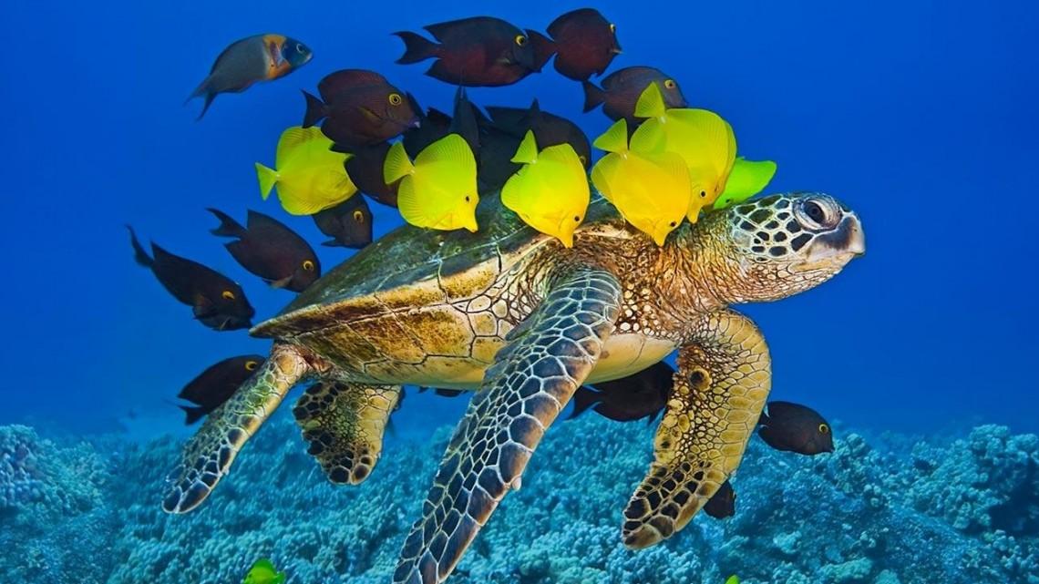 TurtleNTang-reef