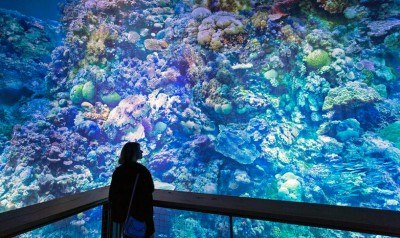 Artist Yadegar Asisi, famous for his use of panoramic video and art, has brought the beauty of Australia's Great Barrier Reef to the Panometer in Leipzig, Germany