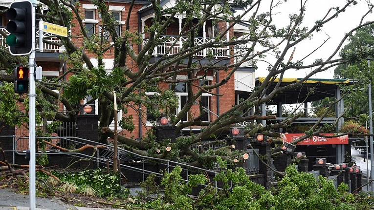 A large fig tree is seen toppled over at the beer garden of the Normanby Hotel in Brisbane