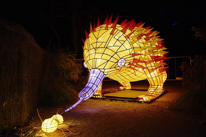 An echidna joined a host of other animals to light up Taronga Zoo. Photo: James Horan/Destination NSW