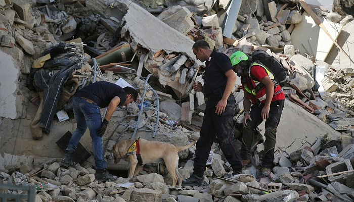 A sniffer dog is used to seek out any survivors under a collapsed building in Amatrice on Wednesday morning