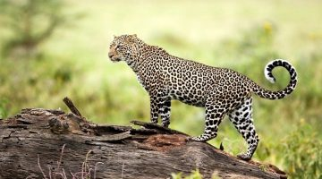 World's wildlife population has declined 60 percent in last 40 years: WWF