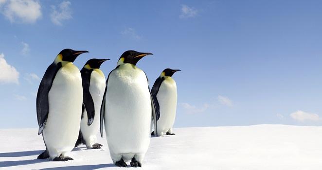 World's largest marine park created in Antarctic Ocean